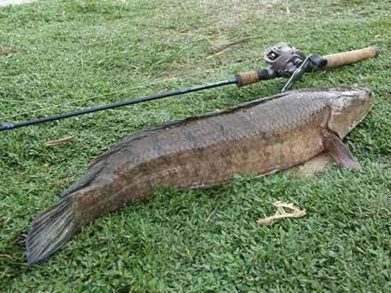 Fishing techniquespicc